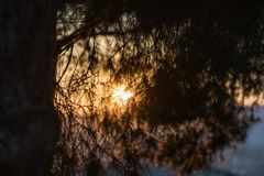 The last sunlight at sunset seen through the spiny leaves of a pine tree in Medellin royalty free stock image