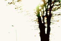 The last sunny day. A tree on the last sunny day in November Royalty Free Stock Photos