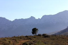 Last survivor. Single pine tree in front of a mountain range Royalty Free Stock Photo