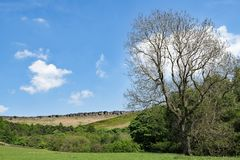 The last to leaf tree, before Stannage Edge, in idylic Haversage, Derbyshire. Taken on a sunny spring day, this captures a beautiful pastoral and picturesque Royalty Free Stock Image