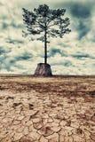 The last tree Royalty Free Stock Photo