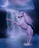 Last unicorn Stock Photography