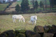 The Last Unicorns stock photos