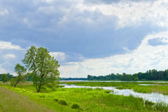 The last wild places. Flood waters of Narew river. Stock Images