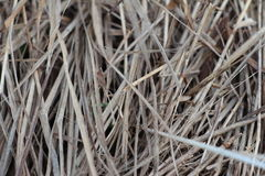 Last year`s grass. Abstract background of earth, dry grass Royalty Free Stock Photo