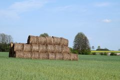 Last year`s straw bales. cereal, rape. Agricultural landscape stock photo