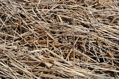 Last year's  straw Royalty Free Stock Images