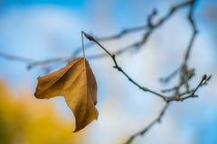 Last leaf of autumn stock images