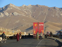 Lastbilar som blockeras av får som samlas på den Pamir huvudvägen i Sary-Tash Royaltyfria Bilder