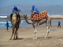 Lastbilschaufför för Ð-¡ amel på stranden Royaltyfri Foto