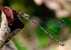 Lasterinsect Royalty-vrije Stock Fotografie
