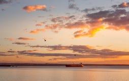 Lastfartyg i botanikfjärd på solnedgången arkivfoto
