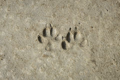 Lasting footprints Stock Photo