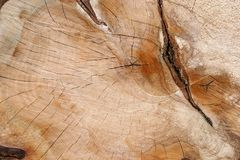 Lastra della quercia Immagini Stock
