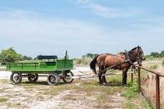 Lastwagen und Pferdegespann stockbilder