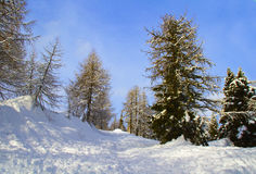 lasu śnieg fotografia royalty free