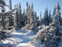 lasu śnieg zdjęcia stock