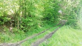 Lasu śródpolny sposób w południowym Germany wiosny należnym czasie obrazy stock