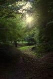 Lasu światło Fotografia Stock