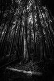 Lasu światło Obraz Stock