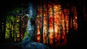 Lasu światło zdjęcie stock