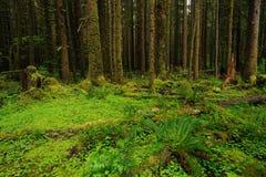 lasu deszcz obraz royalty free