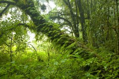 lasu deszcz Zdjęcie Royalty Free