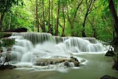 lasu deszcz Obrazy Royalty Free