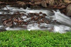 lasu deszcz Zdjęcie Stock