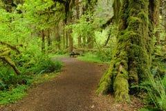 lasu deszczu ślad Zdjęcie Stock