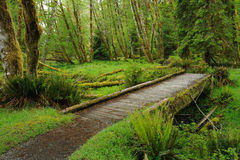 lasu deszczu ślad Fotografia Royalty Free