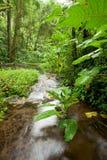 lasu deszczu strumień Zdjęcie Royalty Free