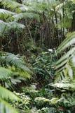 lasu gęsty podeszczowy Fotografia Royalty Free
