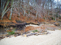 Lasu i driftwood biały piasek na brzeg Zdjęcie Stock