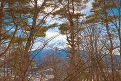 Lasu i Fuji góry tło Obraz Royalty Free