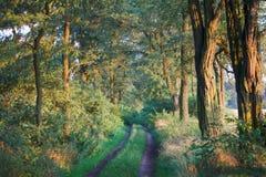 lasu jesienny ślad obraz royalty free