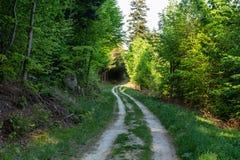 Lasu krajobraz - lasowi drzewa z trawą na przedpolu i zmierzchu lekkim jaśnieniem przez lasowych drzew Zdjęcia Royalty Free