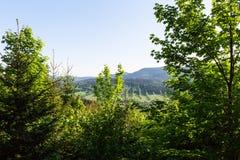Lasu krajobraz - lasowi drzewa z trawą na przedpolu i zmierzchu lekkim jaśnieniem przez lasowych drzew Obraz Stock
