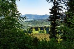 Lasu krajobraz - lasowi drzewa z trawą na przedpolu i zmierzchu lekkim jaśnieniem przez lasowych drzew Obrazy Stock