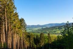 Lasu krajobraz - lasowi drzewa z trawą na przedpolu i zmierzchu lekkim jaśnieniem przez lasowych drzew Obrazy Royalty Free