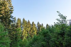 Lasu krajobraz - lasowi drzewa z trawą na przedpolu i zmierzchu lekkim jaśnieniem przez lasowych drzew Fotografia Stock