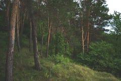 Lasu krajobraz na chmurnym letnim dniu Obraz Stock