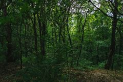 Lasu krajobraz na chmurnym letnim dniu Fotografia Stock
