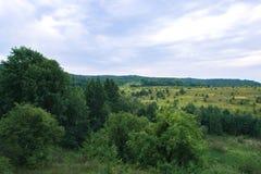 Lasu krajobraz na chmurnym letnim dniu Zdjęcie Royalty Free
