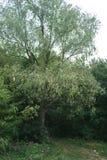 Lasu krajobraz na chmurnym letnim dniu Obrazy Royalty Free
