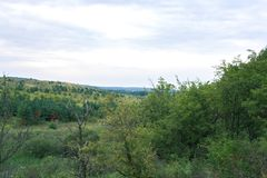 Lasu krajobraz na chmurnym letnim dniu Zdjęcia Royalty Free