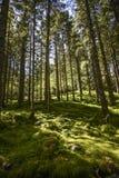 Lasu krajobraz na pogodnym letnim dniu w Bergen, Norwegia Obrazy Royalty Free