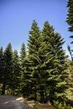Lasu krajobraz na pogodnym letnim dniu w Bergen, Norwegia Obrazy Stock