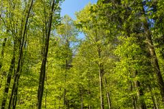 Lasu krajobraz, natura Elb piaskowa góry Zdjęcia Stock