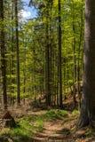 Lasu krajobraz, natura Elb piaskowa góry Zdjęcie Royalty Free